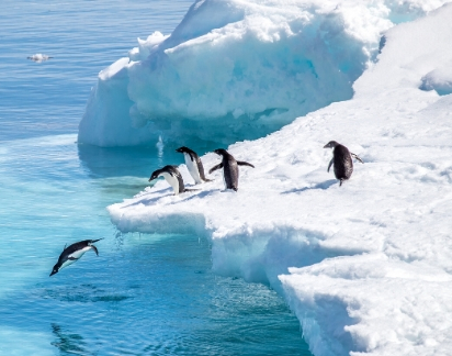 Winter Is Here. Be a Penguin, Not a Bear!